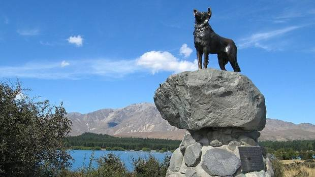 Majestic dog and scenery: the sheepdog memorial at Lake Tekapo.