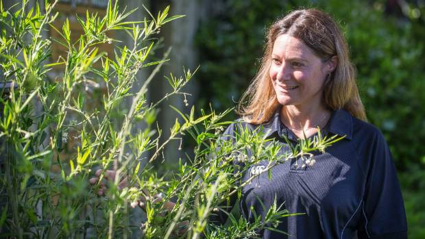 Eve Cozzi encourages people to grow swan plants for monarch butterflies.