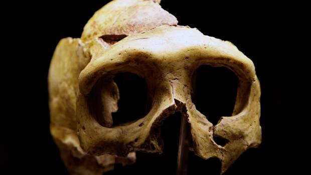 Neanderthals' teeth have given us a better idea about they ate (file pic).