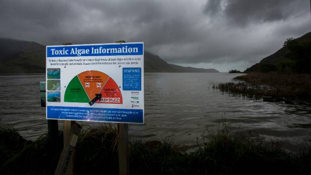 A toxic algae warning at Lake Forsyth in Canterbury.