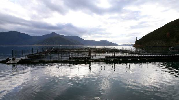 A proposal to relocate up to six salmon farms in the Marlborough Sounds is predicted to bring almost $50m into ...