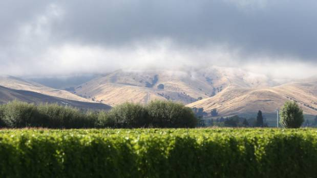 Grape growers are hoping the weather improves, with less rain and more sun during harvest.