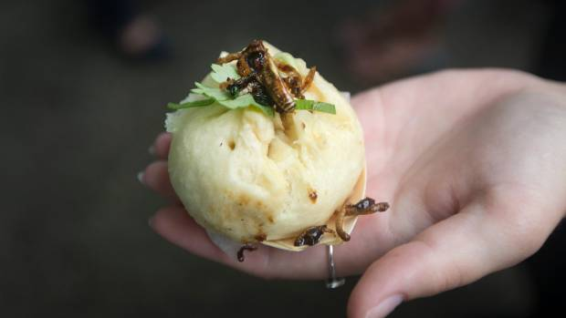 The main meal of the afternoon was a mealworm bun; similar to a pork bun, but the pork is replaced with insects.