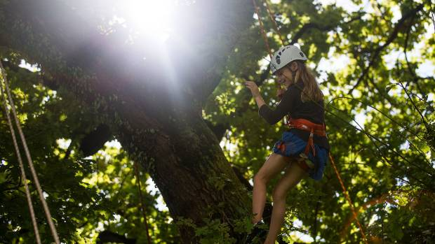 Madison Knowles, 8, has a go climbing a tree with professional arborists supervising.