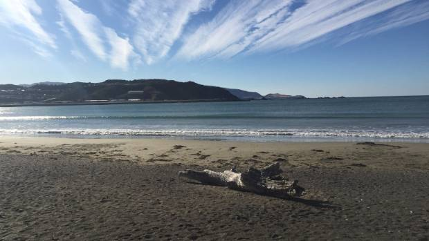 Nicole likes to make the most of living near the beach when the Wellington weather obliges.