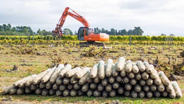 Broken CCA-treated vineyard posts in Marlborough are stockpiled around the region. (File photo)