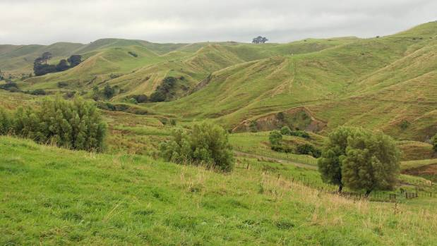 Most of the bottom block of Ratahiwi, near Woodville, is easy hill country used for both breeding and finishing.