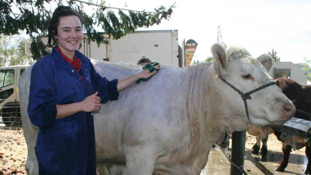 Samantha Hall hoses down one of her entries in the cattle class at the Wanaka Show.