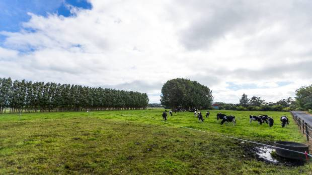 Te Kohia Pa is arguably one of the most significant sites in New Zealand history.