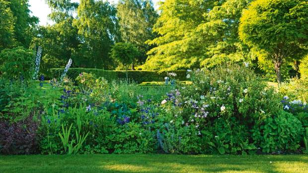 "Several varieties of blue flowers feature in the herbaceous border between the two lawns: ""It's a nightmare of a garden ..."