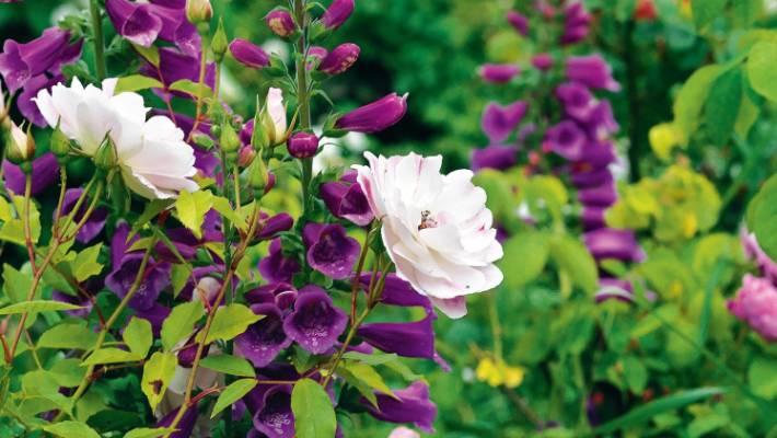 Common Garden Plants That Should Have Warning Labels Stuff Co Nz