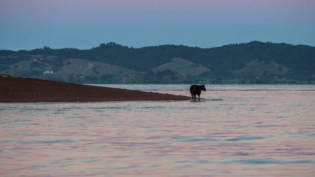 Friday got into the habit of standing on the shoreline waiting for the quarry workers, and her breakfast, to arrive.