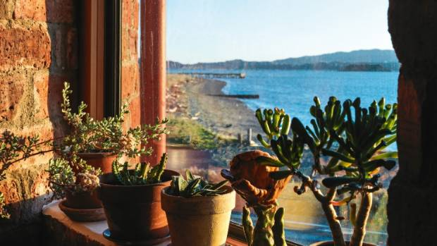 Succulents adorn a window sill.