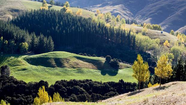 Hard North Canterbury hill country with  pine plantations, native bush, pasture and poplars side by side, all doing ...