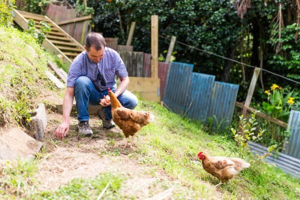 David Cripps and chickens in his seedsaving garden in Moturoa.