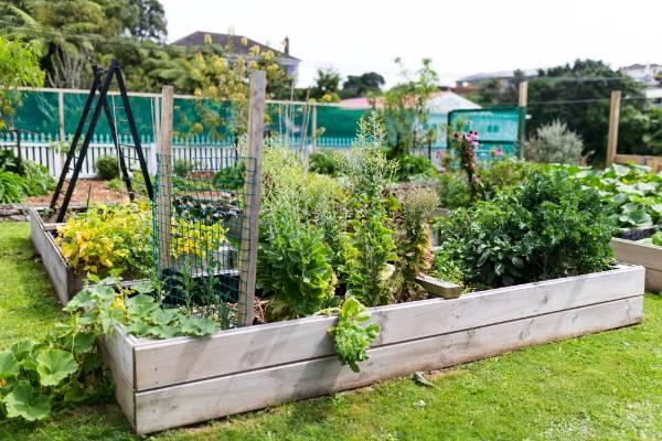 The raised vegetable garden.
