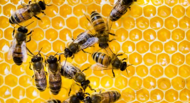 The number of registered beekeeping enterprises rose 21 per cent in the past 12 months.