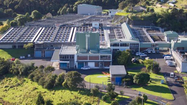 Auckland water plant on the mend