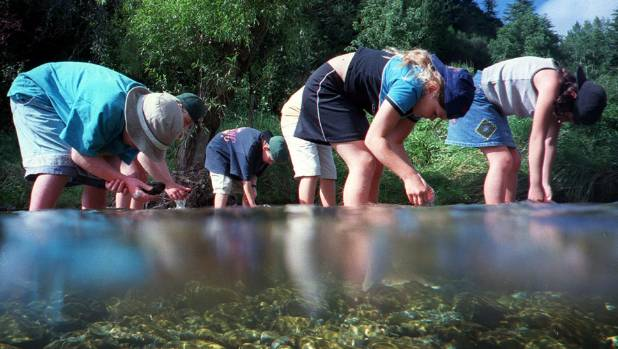 Hira School pupils study insect life in the Wakapuaka River.