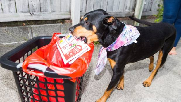 Libby puts the junk mail in the bin.