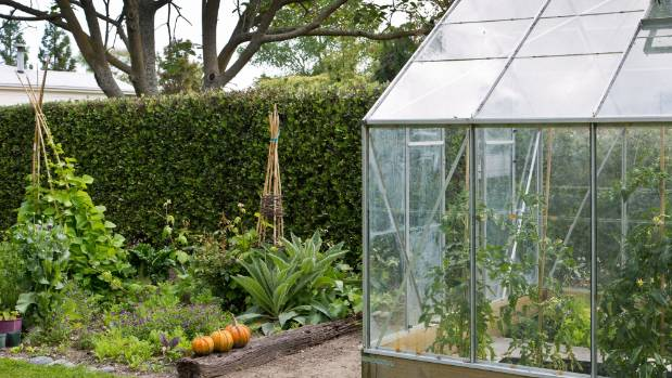 Tomatoes and other edibles can be grown in a glasshouse beside an outdoor vegetable garden.