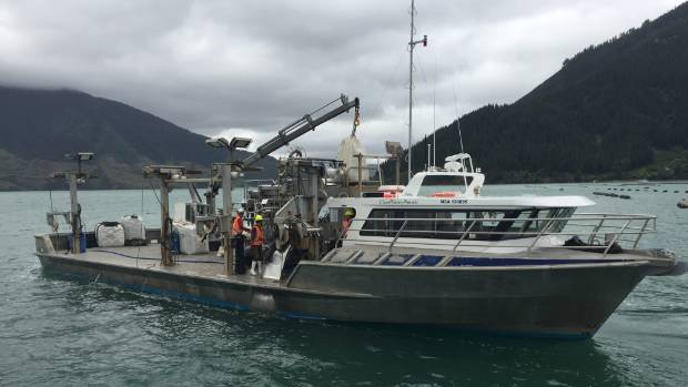 A mussel boat in the Marlborough Sounds. Clearwater Mussels owner John Young doubts the proposed salmon farms will have ...