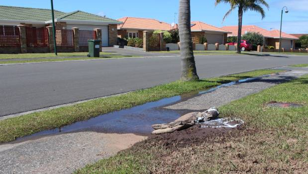 The water flowed from the leak to Valerie Bell's driveway then onto the road and five houses down to the nearest drain.
