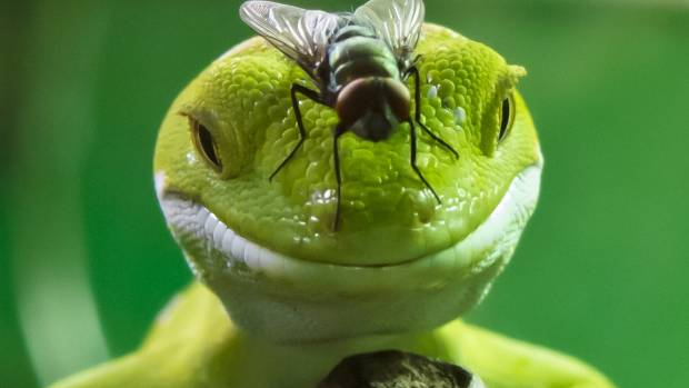 Geckos were constant wallflowers, but would often leave unwelcome treats.