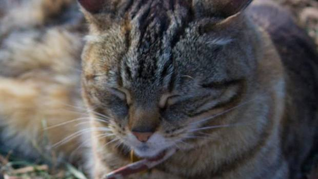 Lola the Aro Park Cat has her own Facebook page with more than 1300 likes.