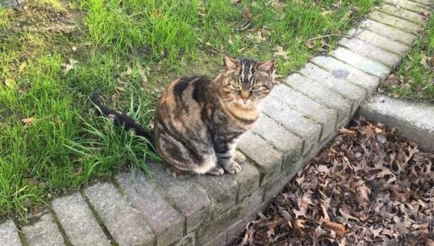 Much-loved tabby Lola the Aro Park Cat was attacked by a dog at the weekend. She suffered a broken paw but is recovering ...