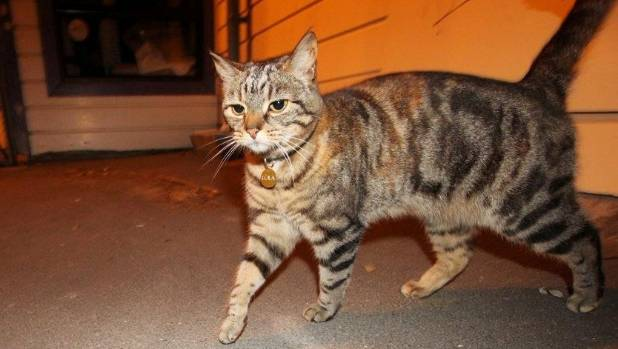 The internet-famous moggy is most known for spending her days in Aro Park befriending passersby.