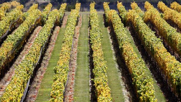 A report commissioned by Wine Marlborough showed RSE-accredited contractors serviced 75 per cent of the vineyard area in ...