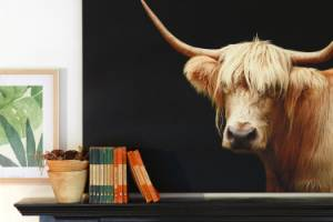 The Highland cow photograph is by Australian photographer Tony Sheffield.