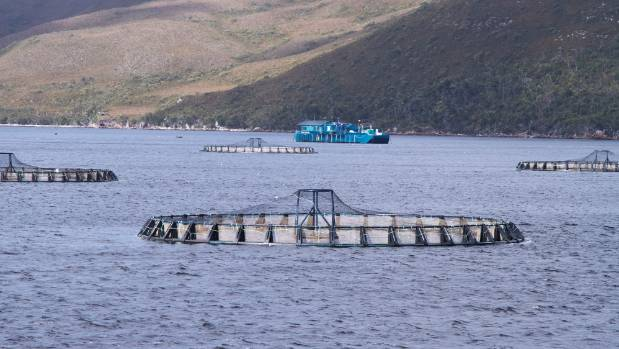Salmon farms at Macquarie Harbour, in Tasmania.