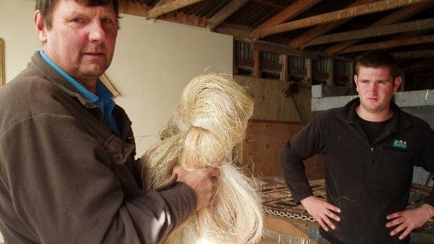 Howard Robertson holding a hank of processed flax fibre hemp with fellow volunteer Peter Templeton.
