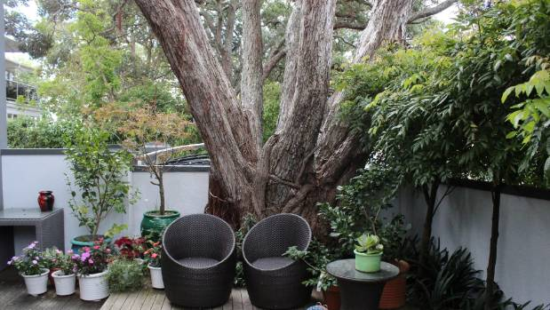The protected phoutukawa tree in the Chatterley's Takapuna back yard is over two metres wide at it's base.