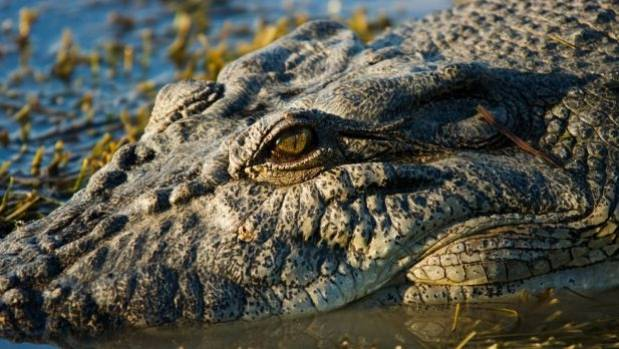 Australian teen mauled by crocodile jumped into river to impress