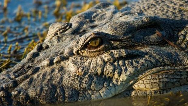 It was understood Anne Cameron went for a swim in an area inhabited by crocodiles. (File photo)