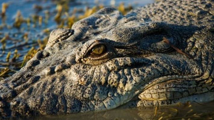 e488b29e7 A crocodile has been euthanised following the death of spear fisherman  Warren Hughes (file photo