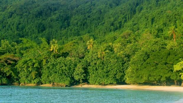 Ekos' Loru Forest Project, Santo, Vanuatu.