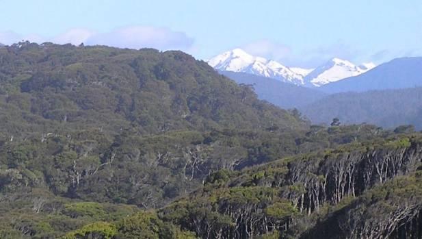 Rarakau Rainforest Conservation Project, western Southland, adjacent to Fiordland National Park