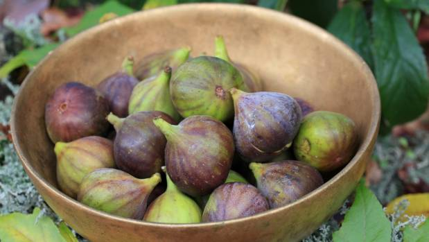Fresh figs are delicious on their own and also match beautifully with cheese, honey and walnuts.