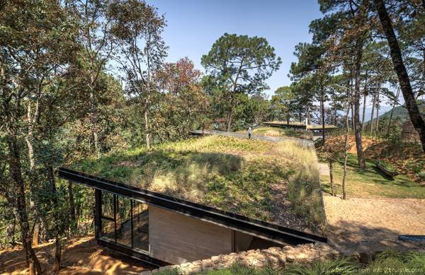 The house is effectively camouflaged by its green roof.