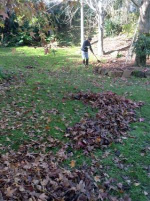 4. Rake out dead grass & moss: Moss thrives in most lawns particularly during the wetter, cooler months. Resist the urge ...