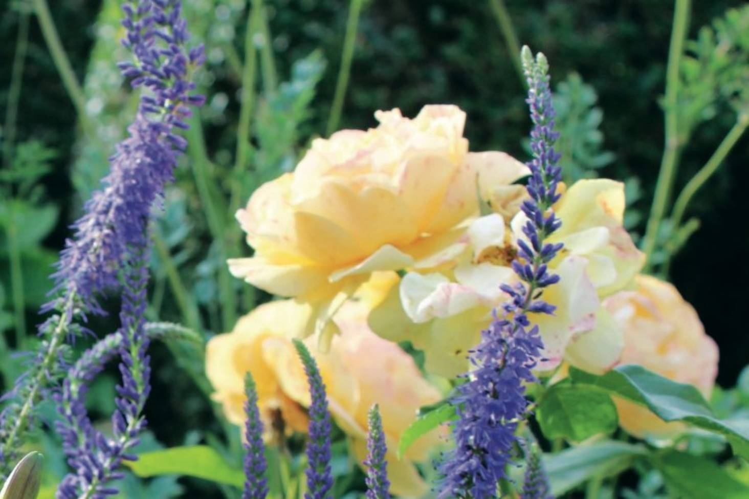 Blue And Yellow Flowers Are A Classic Colour Combination Stuff
