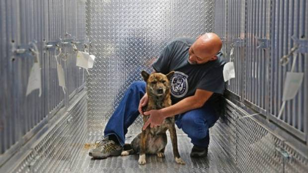 Dogs rescued from South Korea dog meat farm headed to Md