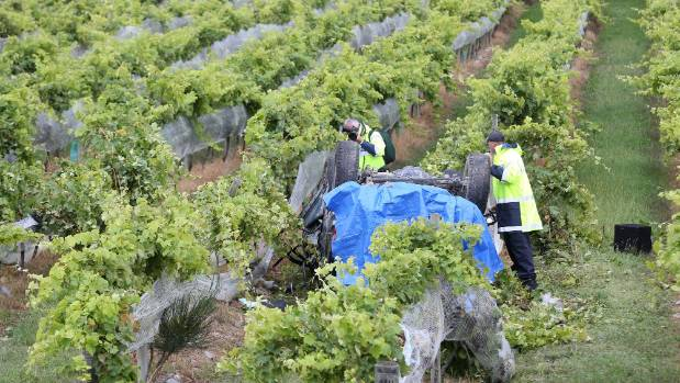 Police investigate a fatal crash where a car left State Highway 6 and ended up in a vineyard.