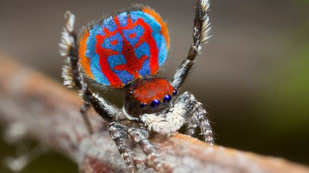 Hungry spiders can eat every human on Earth in one year!