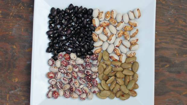 Four varieties of dried heritage beans. Store and cook each sort separately as they have different cooking times.