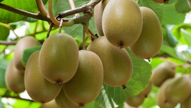Leave the skin on your kiwifruit and eat whole – it triples the fibre content.